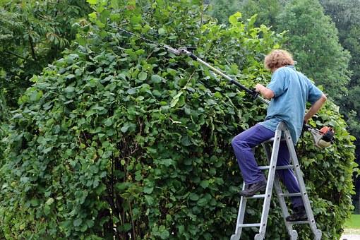09/11, 10/11, 11/11/2020 Baum- und Heckenschnittsammlung