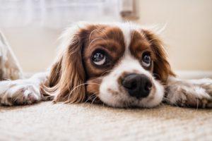 Avis aux détenteurs de chiens